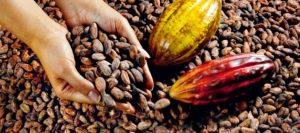 Les cinq conditions pour un bon chocolat